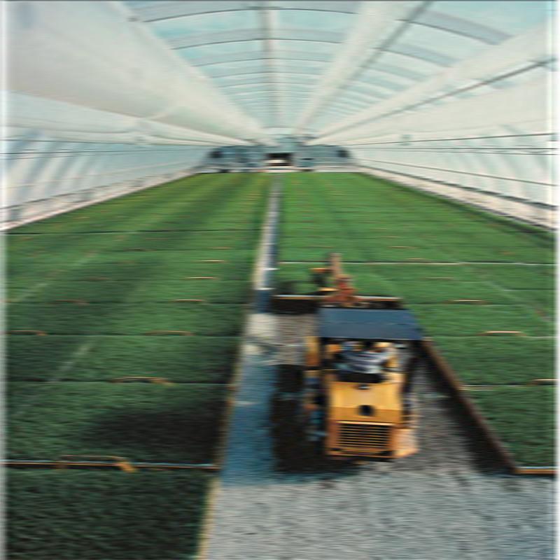 阳光板催芽车间温室